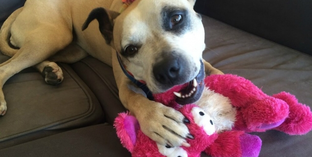 Dog with Pink Toy