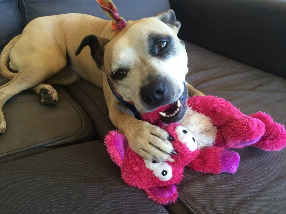 Pink Dog Toy : Ways to help your dog survive the fourth of july