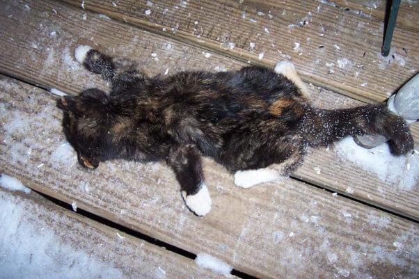 Kitten frozen outdoors
