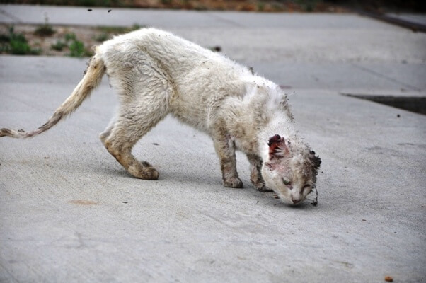 emaciated stray cat