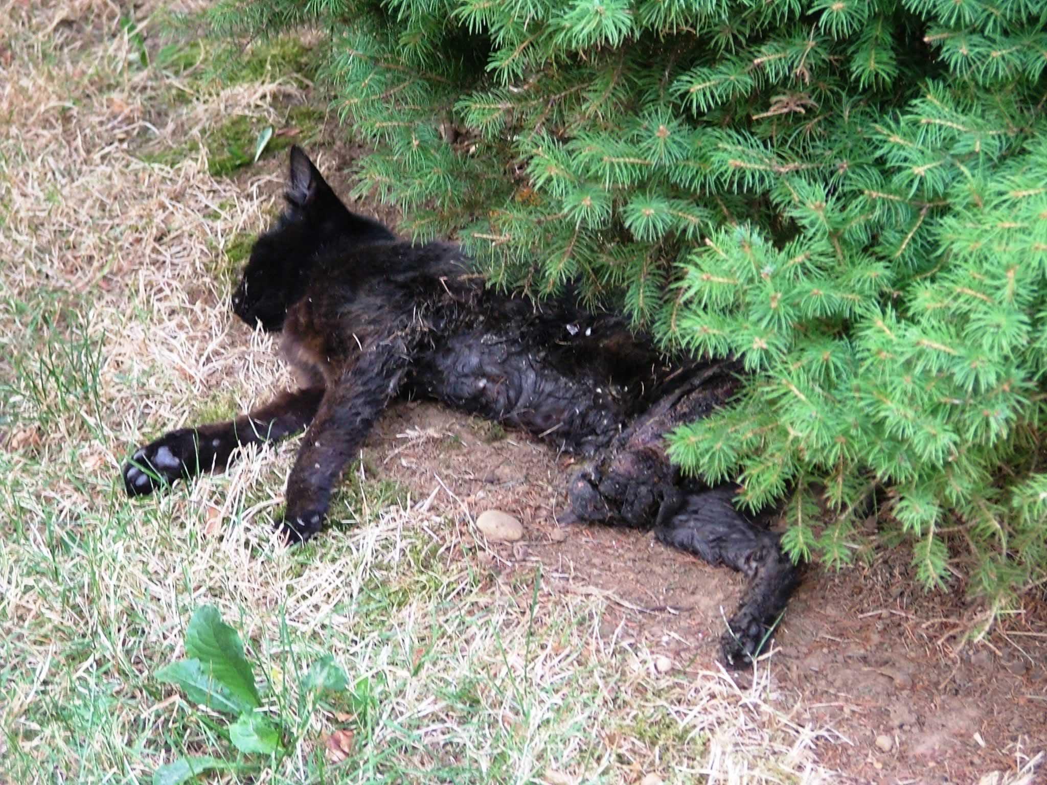 43c4e914b Horrific Fates of  Outdoor Cats  in 2015