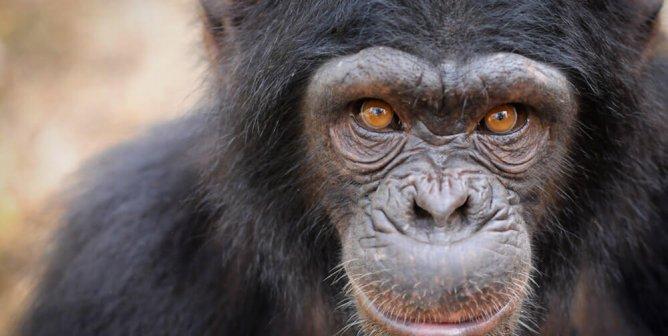 Tell Hallmark Cards to Stop Exploiting Chimpanzees!