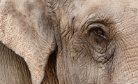 Japan's Oldest Elephant Dies After Decades Alone