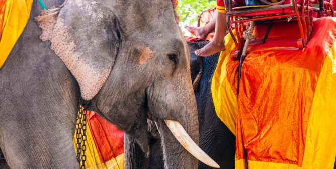 Caring People Say 'I Don't' to Renting Elephants for Weddings