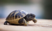 PETA Sting Leads to Conviction for Baby-Turtle Peddler