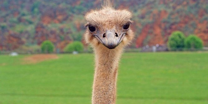 Owner of Juicy Couture, Jennifer Lopez Collections, and Others Bans Ostrich