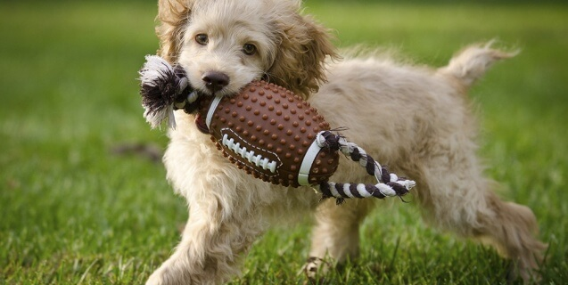 PETA's Play-by-Play: THE Super Bowl Coverage for People Who Care About Animals