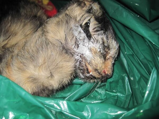 Pirelli died after being denied veterinary care for an apparent respiratory infection.