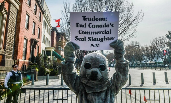 PETA's 'seal' protests Canadian seal slaughter