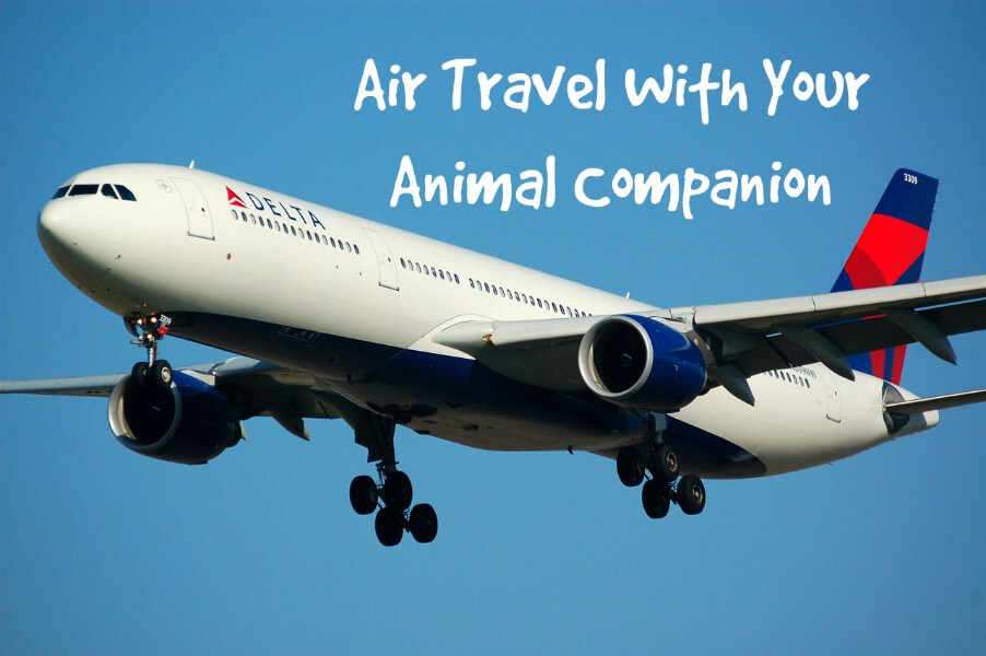 Air Travel With Your Animal Companion