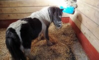 Meet Some of the Animals We Helped in March