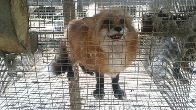 2018 Fur Ban