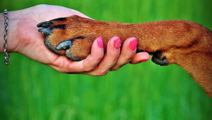 Planning for Your Beloved Animal Companions