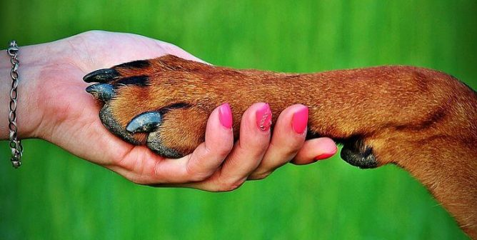 Keep Beloved Companion Animals With You After They're Gone
