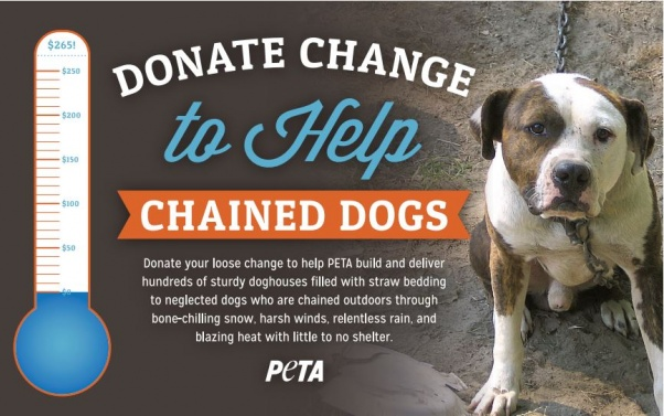 change for chained dogs