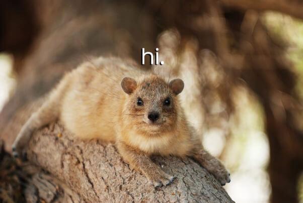 hi-hyrax