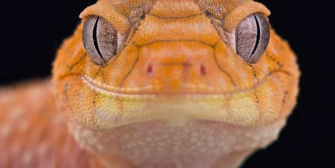 Victory! German Pet Stores Scale Back Reptile Sales