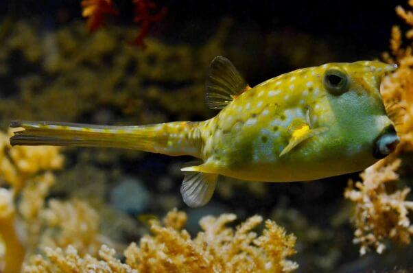 loyal-blowfish