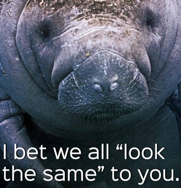 manatees-are-people-too