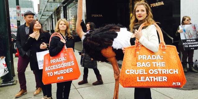 Prada's Newest Shareholder Is PETA—Find Out Why
