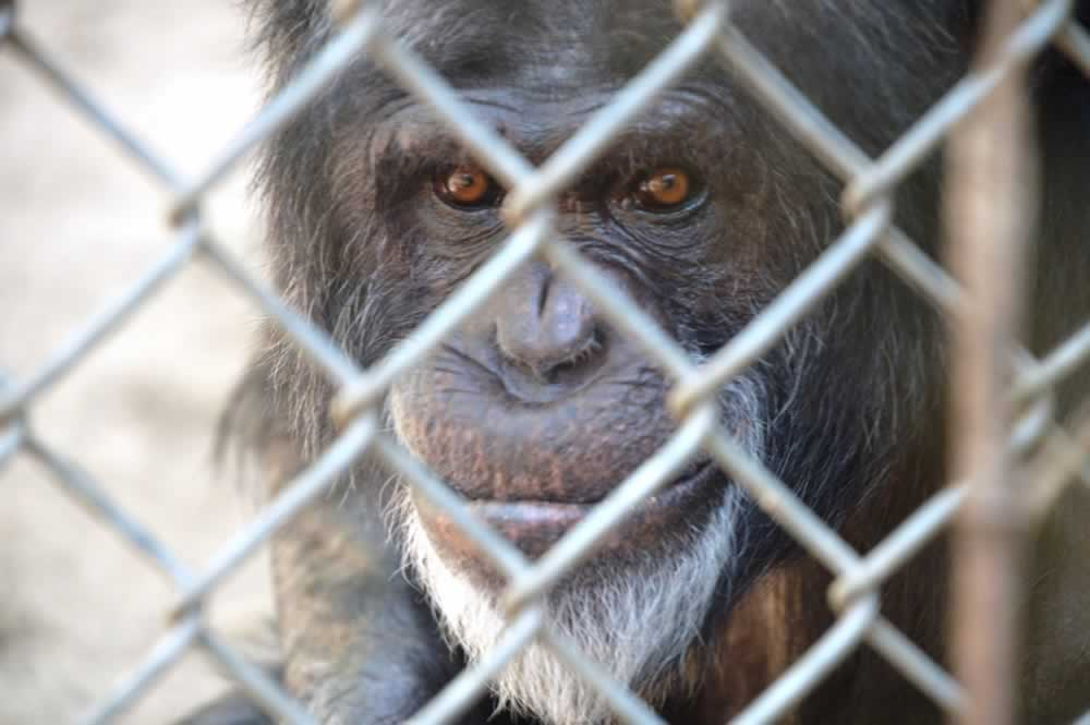 2016- USDA Revokes The Mobile Zoo's License