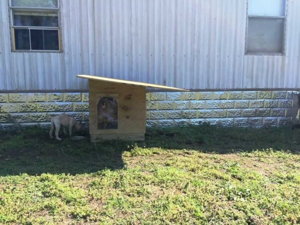 Sophie's new doghouse