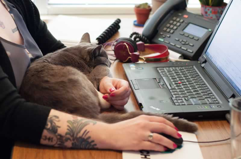 9 Ways Your Animal Companion May Actually Be the Boss of You