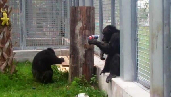 Joe and Geraldine at Save the Chimps