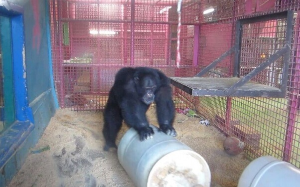 Connor at the Missouri Primate Foundation