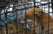 USDA Cites Breeders for Abuse, Then Gives Them a Ton of Business