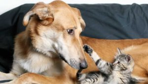 The Responsible Renter's Guide to Animal-Friendly Housing