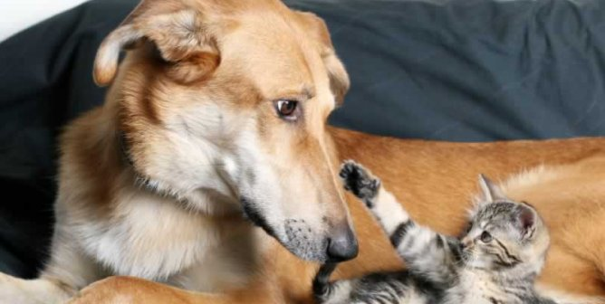 Online Resources for Finding Animal-Friendly Housing