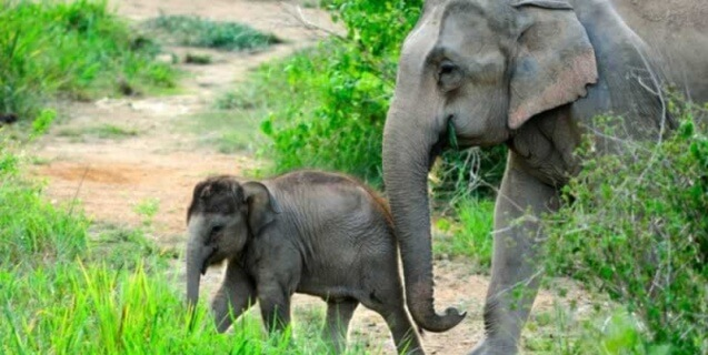 How YOU Can Help Stop Elephant Abuse