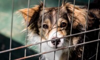Dog Suffocates in Plastic Bag in Botched Home 'Euthanasia'