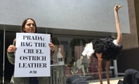 PETA Members Bury Their Heads in Sand at Prada as 'Skinned Ostrich' Protests