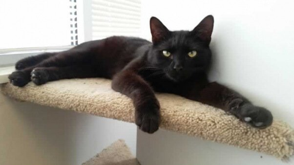 Prince, a rescued cat who needs  a new home