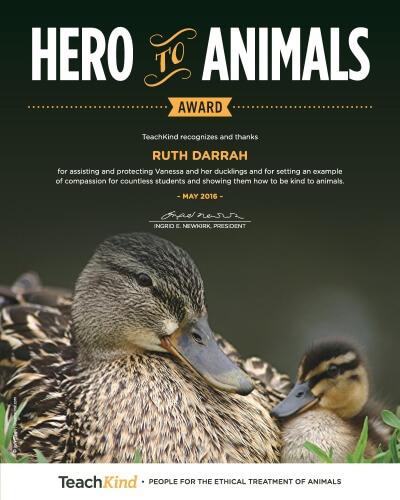 award to village elementary school teacher for helping duck