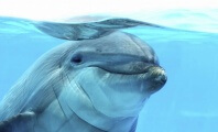 HSBC Pulls Ad – There's Suffering Behind Dolphin Kisses