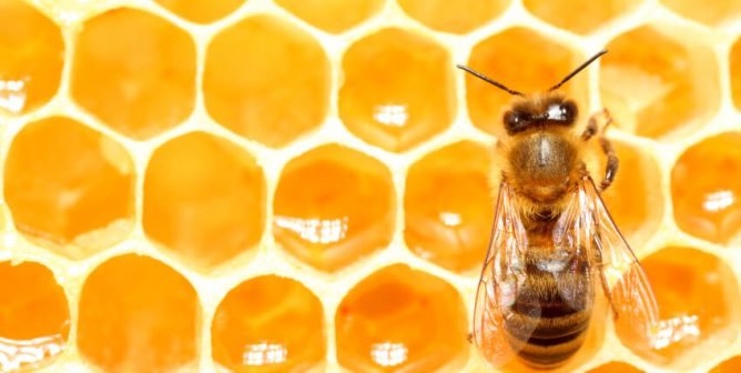 Do Vegans Eat Honey or Use Beeswax? Nope | PETA