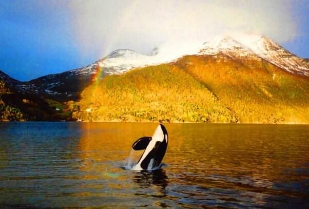 Mark's photo of Keiko in Norway.