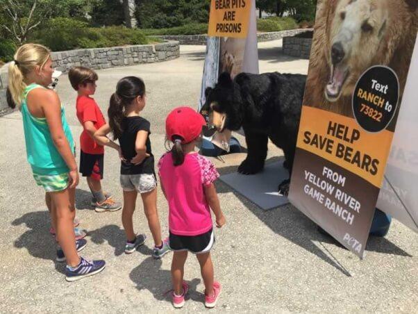 Bernard the Bear demo