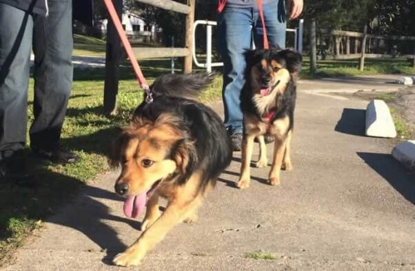 Rescued dogs Shelby and Buddy reunited after a year
