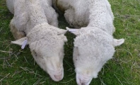 Shocking Photos: How Did These Sheep Abusers Avoid Prosecution?