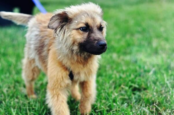 Ariel, a dog rescued by PETA and available for adoption