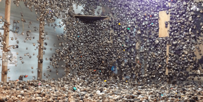 Live Hermit Crabs' Shells Crushed, Hundreds Dead at Pet Trade Supplier