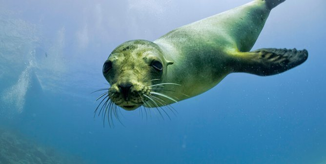Wild Sea Lions Face Torment and Abuse in San Diego!