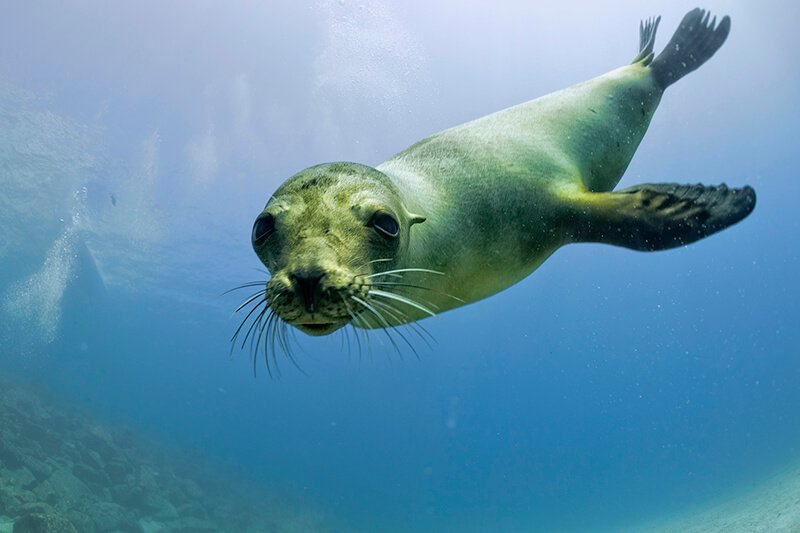 Newborn Sea Lions and Seals Threatened by Fireworks Show in San Diego