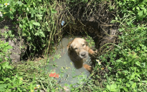 dog trapped in septic tank