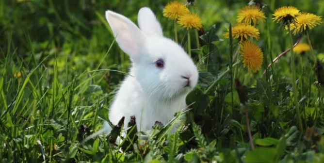 Progress for Rabbits and Horseshoe Crabs Used in Painful Fever Test