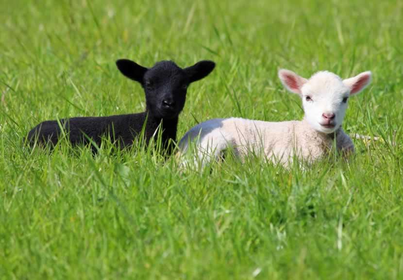 Vegan Fabrics Are Way Better Than Wool—Here's Why